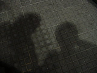 buscando la sombra